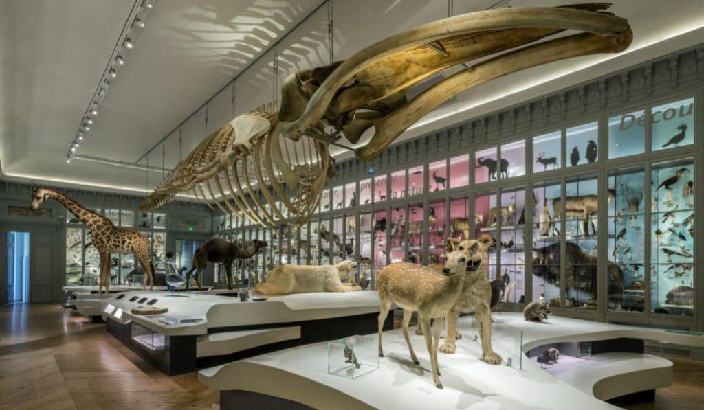 Les musées seront gratuits tout l'été à Bordeaux !