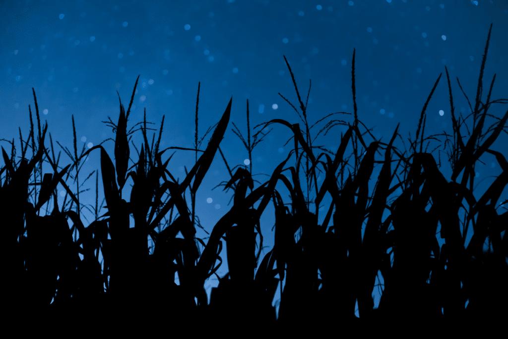Participez aux Nuits de l'Horreur dans un champ de maïs géant près de Bordeaux !