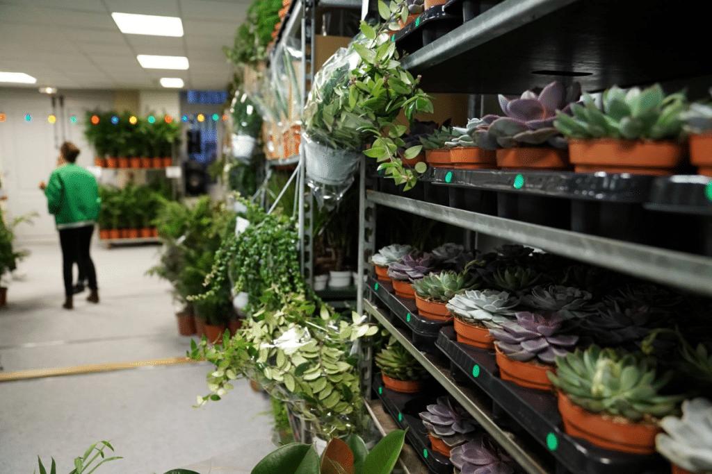 Une vente XXL de plantes à prix minis à Bord'eau Village ce week-end !