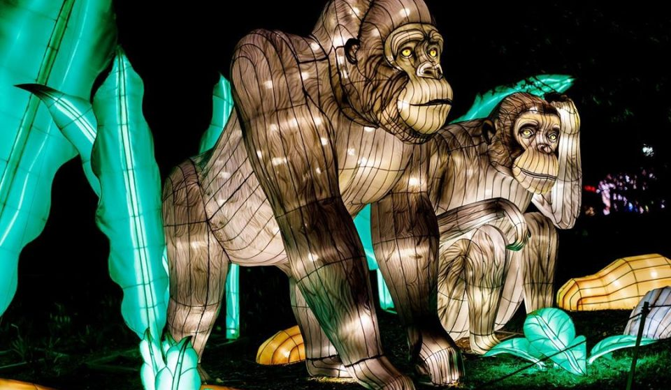 Experience Nature In A New Light With Franklin Park Zoo's Dazzling Lantern Exhibit