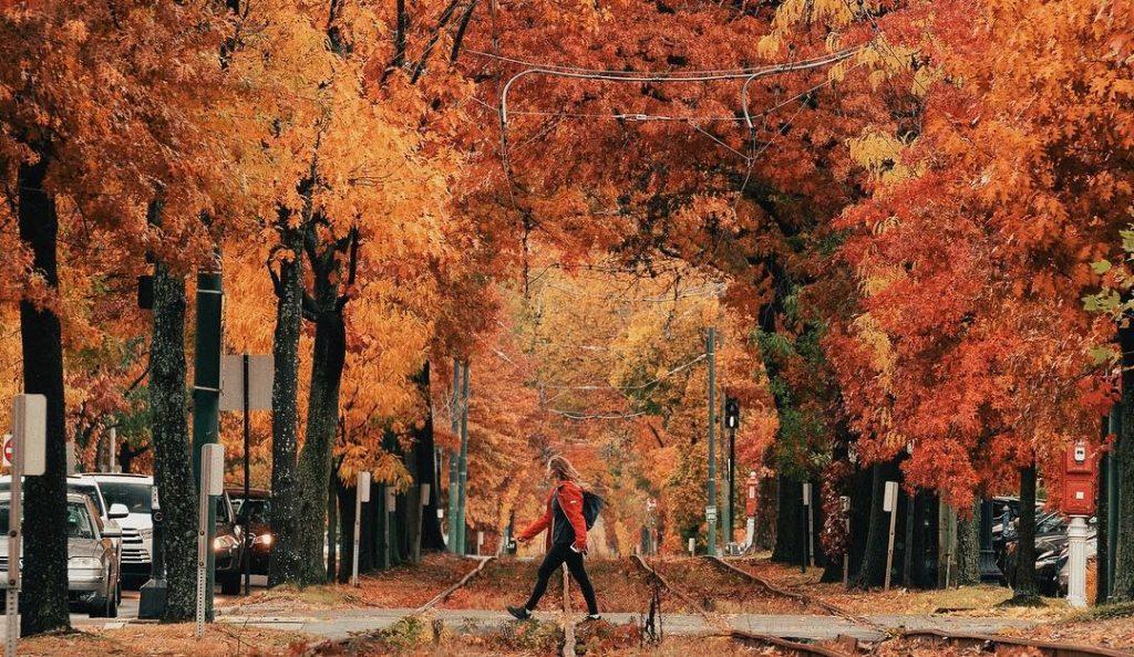 Boston Fall Shots