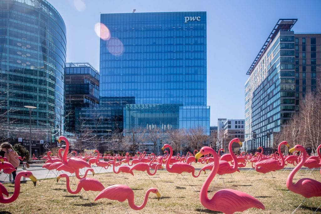An Unusual Flock Of Birds Has Taken Up Residence In Boston Seaport