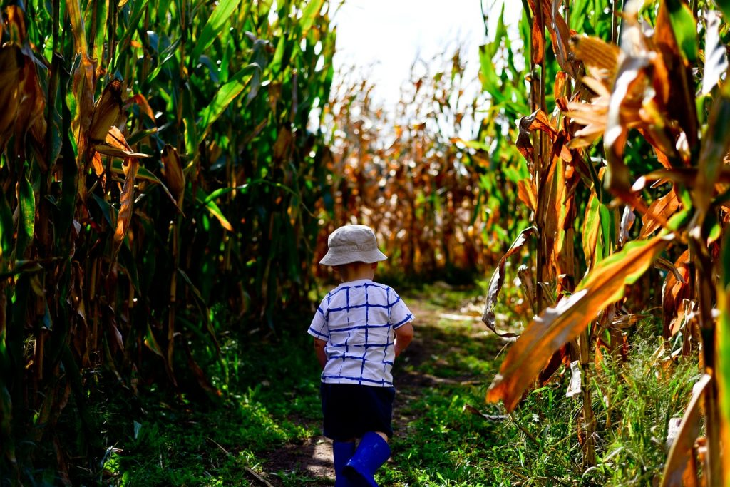 5 Corn Mazes Near Boston To Get Lost In This Fall