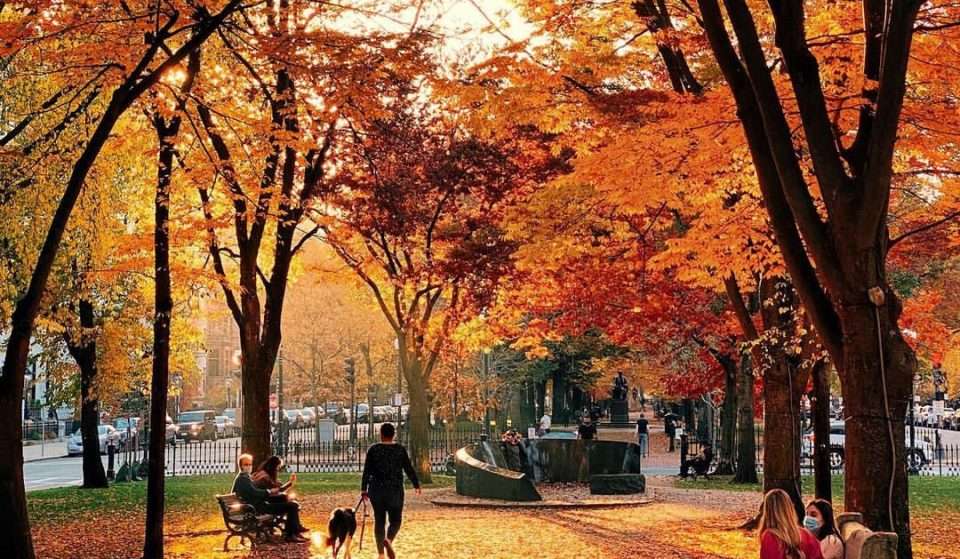 53 Things To Do This Autumn In Boston: The Ultimate Fall Guide