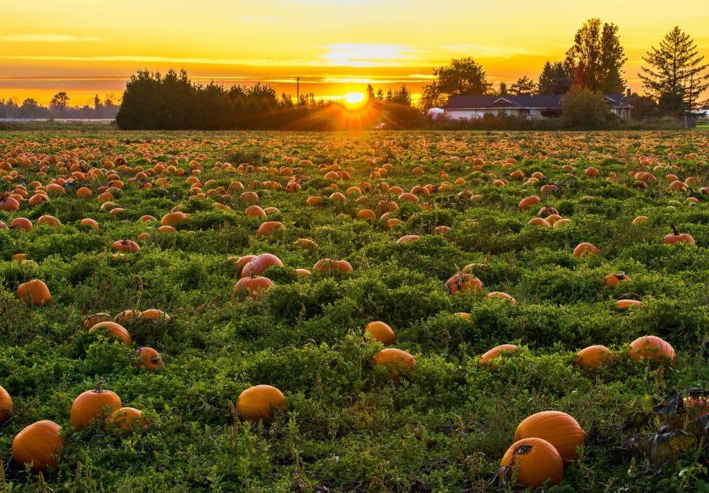 8 Places To Go Pumpkin Picking Near Boston This Fall