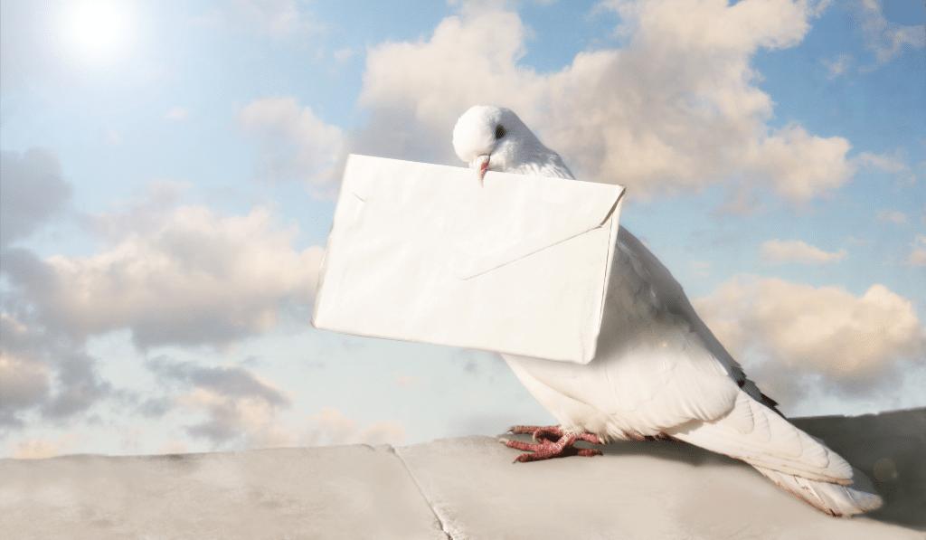 En Belgique, un pigeon voyageur vendu à 1,6 million d'euros !