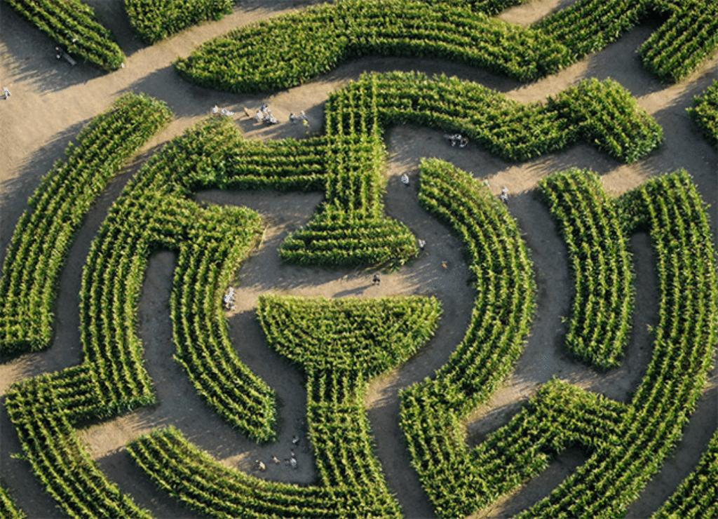 Insolite : le Labyrinthe Géant de Barvaux rouvrira ses portes le 3 juillet prochain !