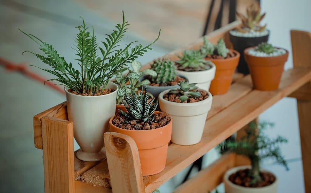 PUP Plants : une grande vente de plantes va avoir lieu début octobre à Bruxelles !