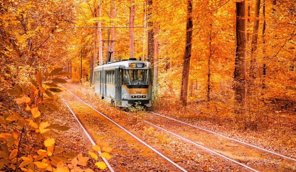 Tram 44 : le plus beau voyage en tramway de Bruxelles !