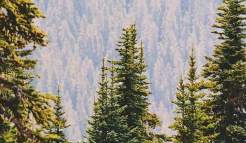 En estos lugares puedes comprar árboles navideños sustentables