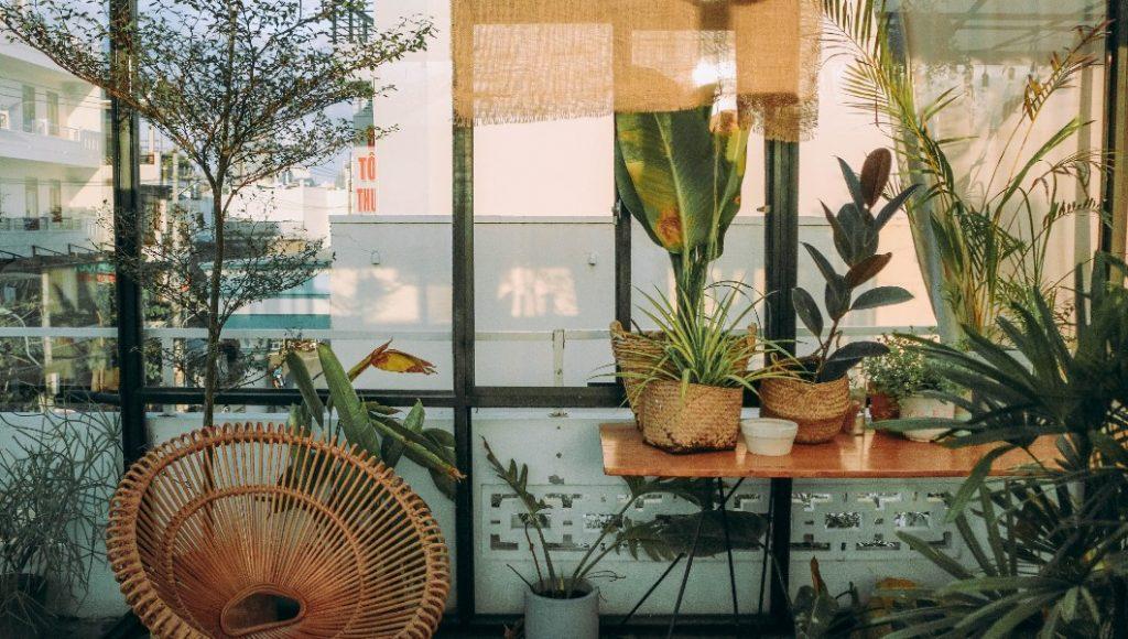 Los mejores lugares para comprar plantas en la CDMX