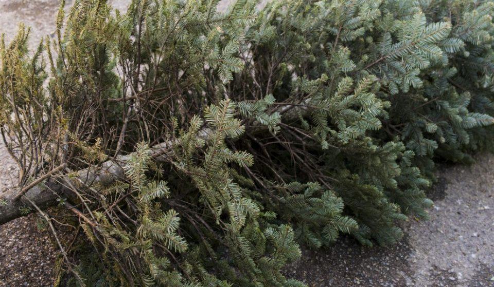 ¡No tires tu árbol! Mejor llévalo a reciclar aquí