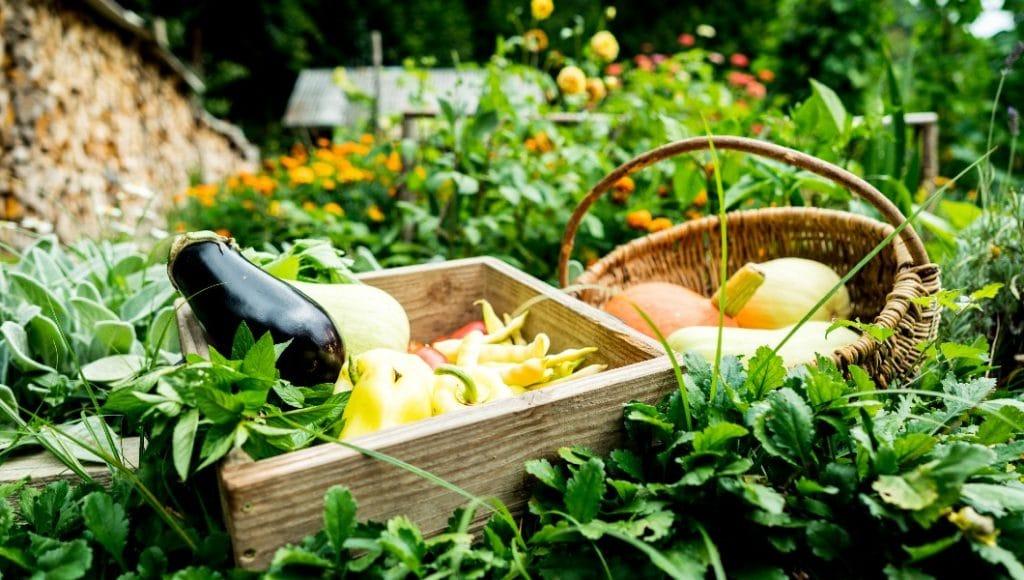 10 canastas de frutas y verduras orgánicas que llegan hasta la puerta de tu casa