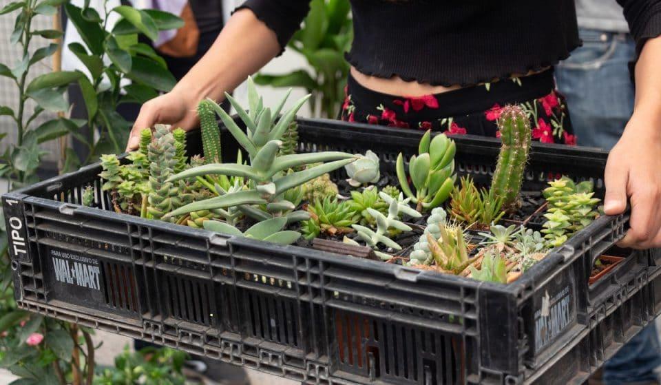 Plant Fest: un bazar con plantas desde 15 pesos
