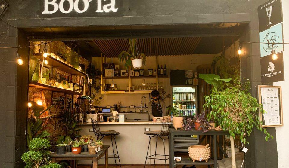 Boo'la, el nuevo cafecito con plantas que necesitábamos