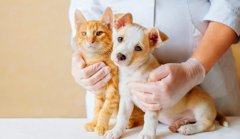 Esta semana es gratuita la vacuna antirrábica para perros y gatos en varios puntos de la ciudad