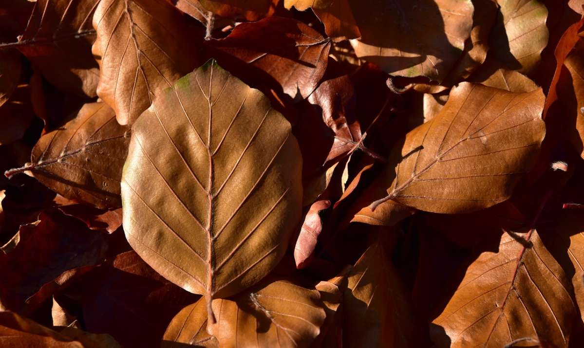 otoño en cdmx
