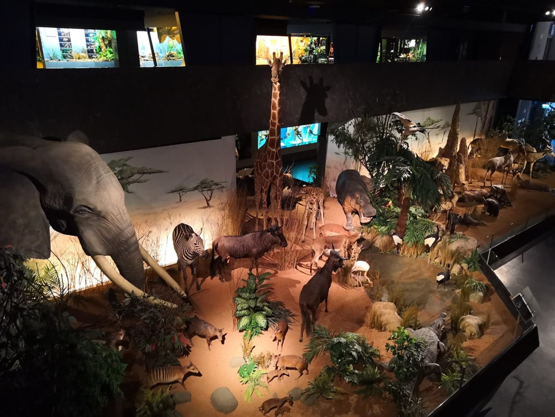musee d'histoire naturelle geneve