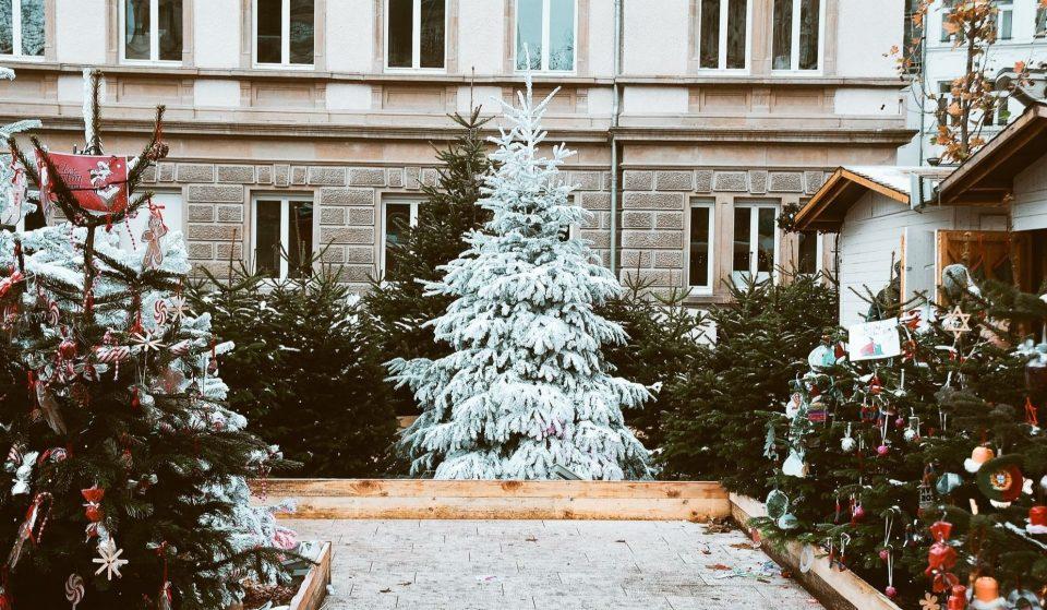 Où acheter son sapin de Noël à Genève ?