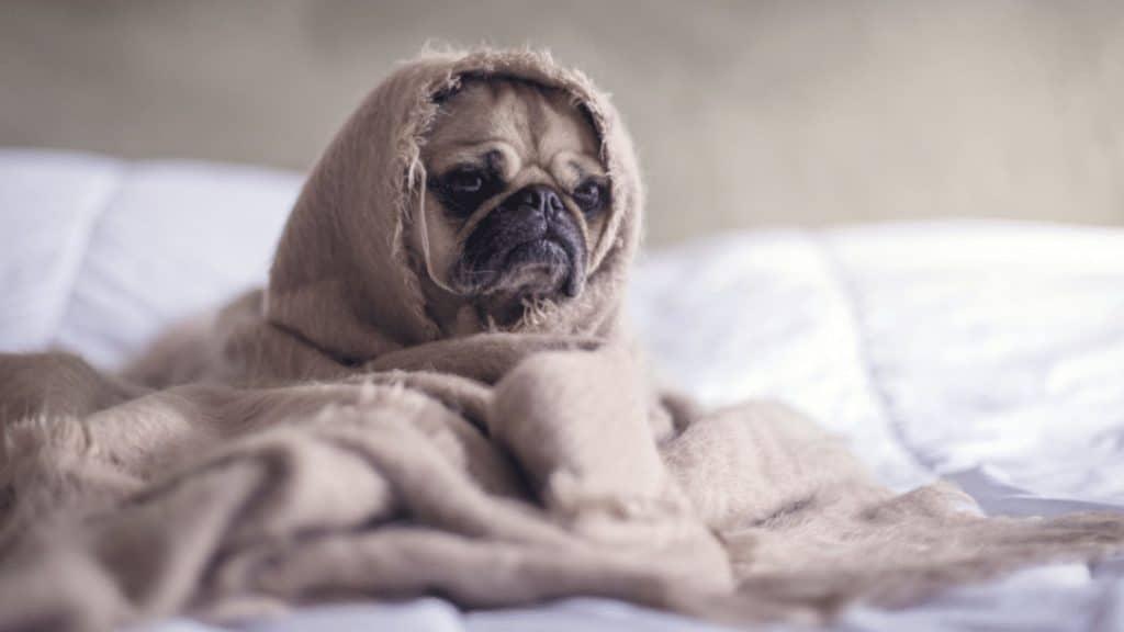 sommeil et confinement améliorer