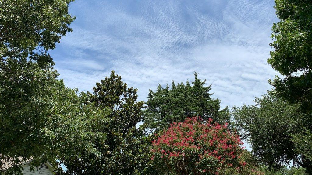genève planter 500 arbres nature printemps écologie environnement seve