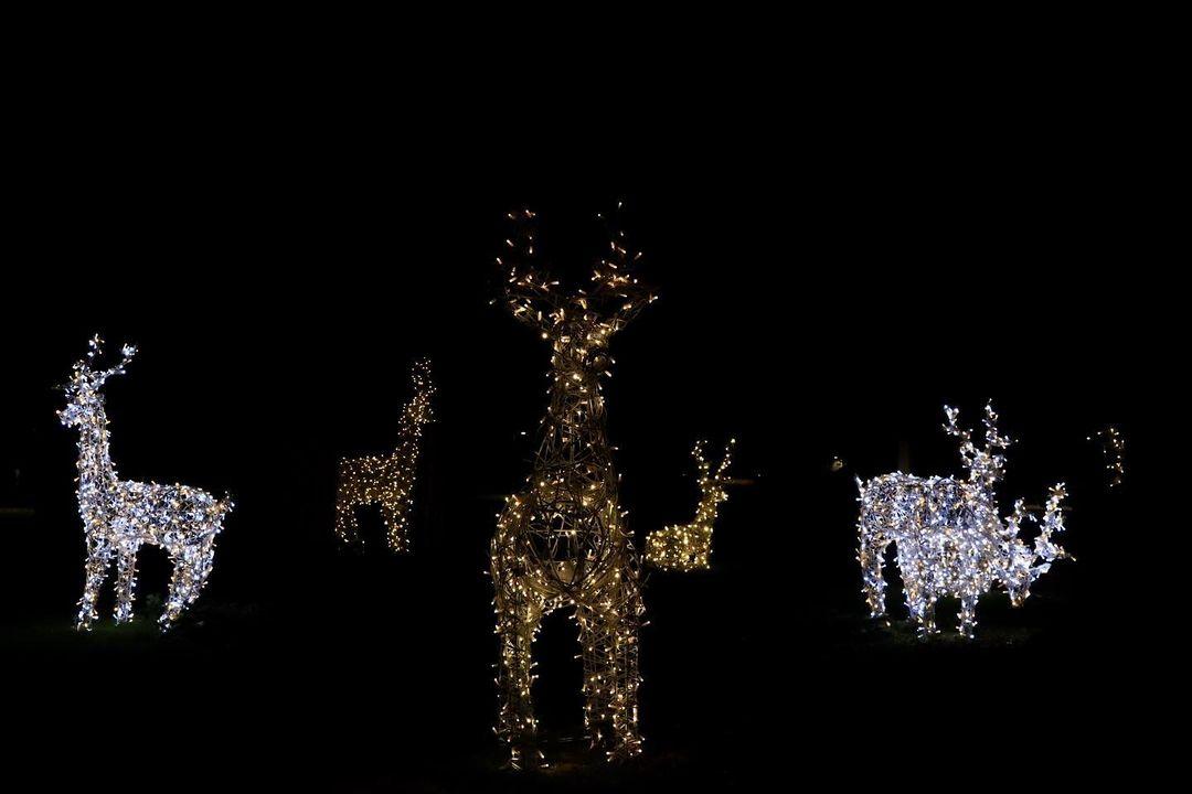 eglou.gva décoration noel illumination 2020 genève 1