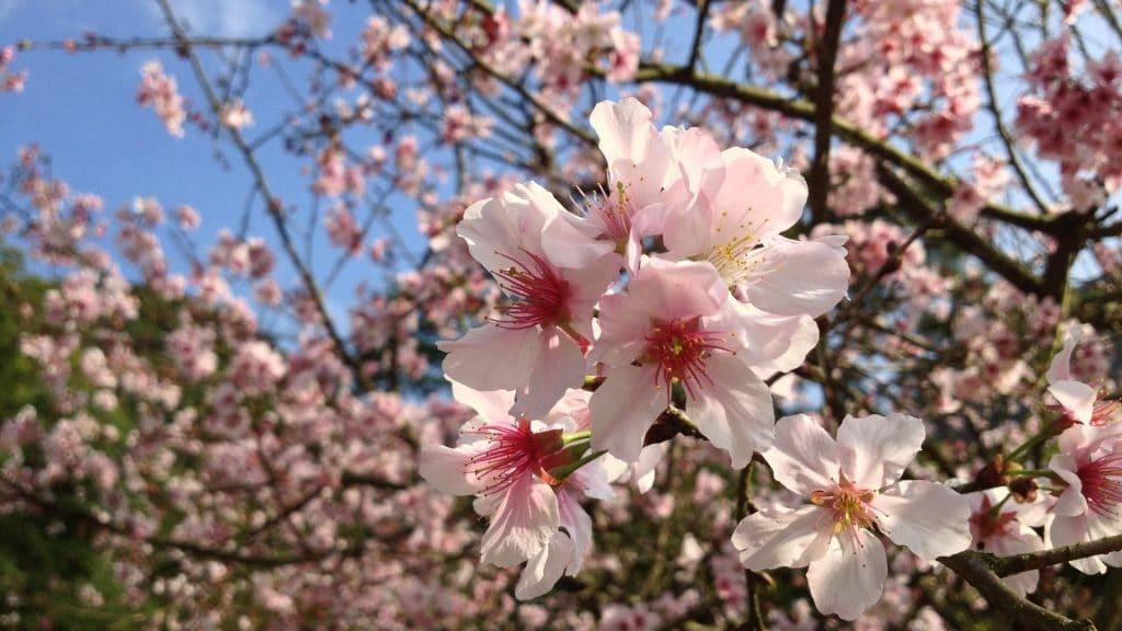 floraison fleurs genève printemps plus belles photos