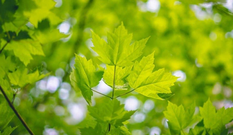 Environnement : Vers une végétalisation des abribus et rues piétonnes de Genève ?