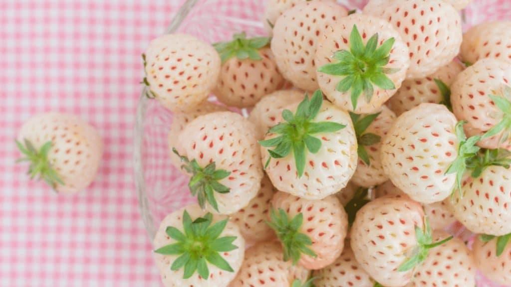 fraises blanche tendance nature fruits été