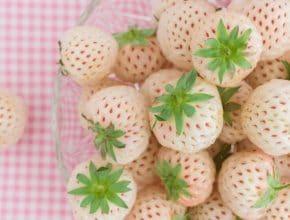 Tendance food : les fraises blanches goût ananas, à cultiver chez soi !