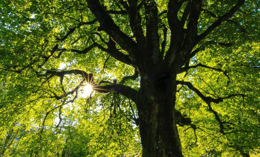 nature genève 900 arbres plantés