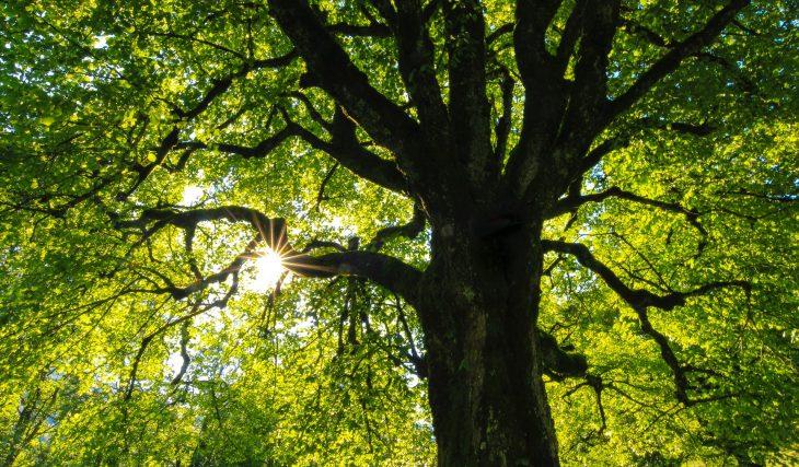 Nature : Genève veut planter 900 arbres d'ici la fin de l'année, et vous pouvez en parrainer !