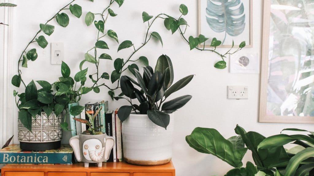 Bon plan week-end : Deux grandes ventes de plantes pas chères organisées à Lille !