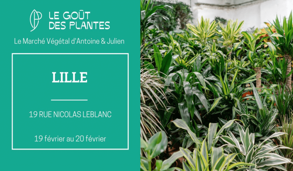 Bon plan : une vente éphémère de plantes à partir de 2 euros ce week-end !