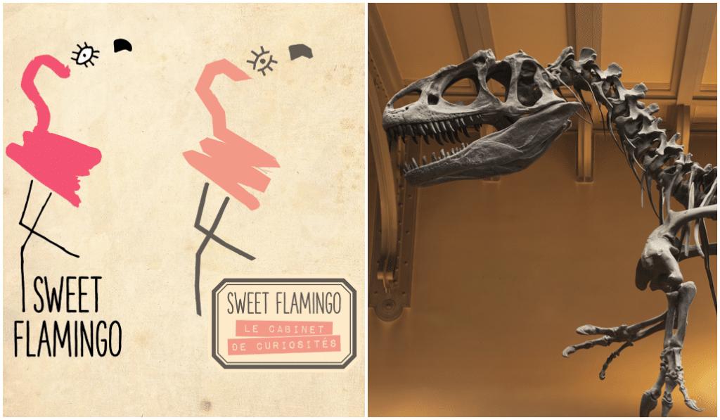 Le Sweet Flamingo se niche au Musée d'Histoire Naturelle !