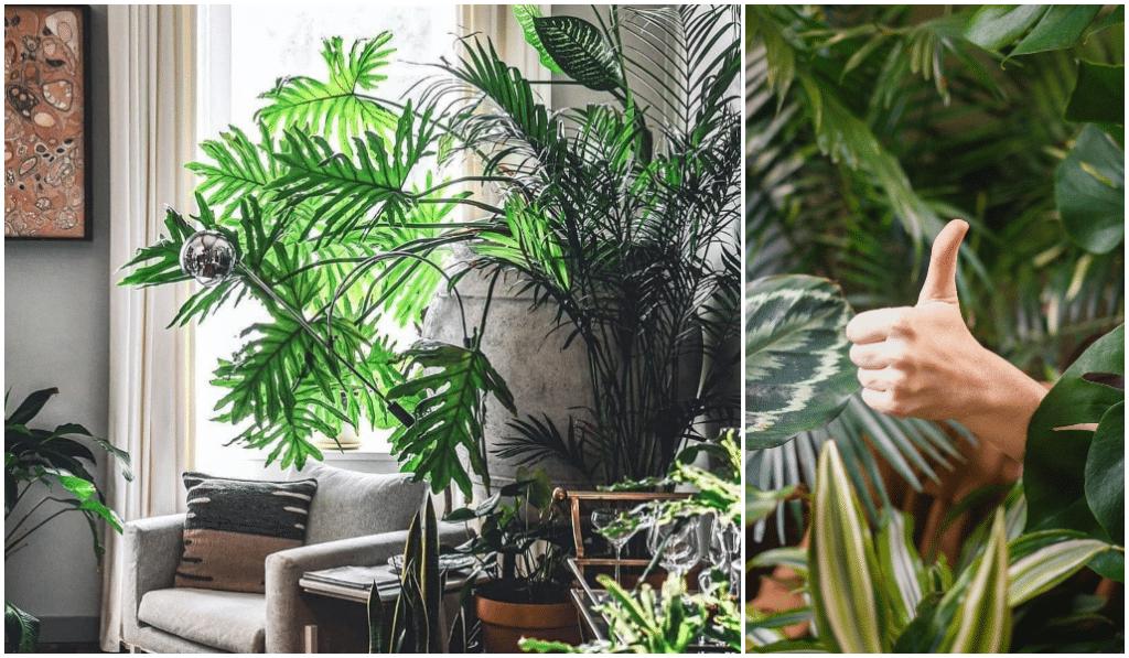 Bon plan : Plantes Addict organise une vente de plantes à partir d'1€ au Clockwork !