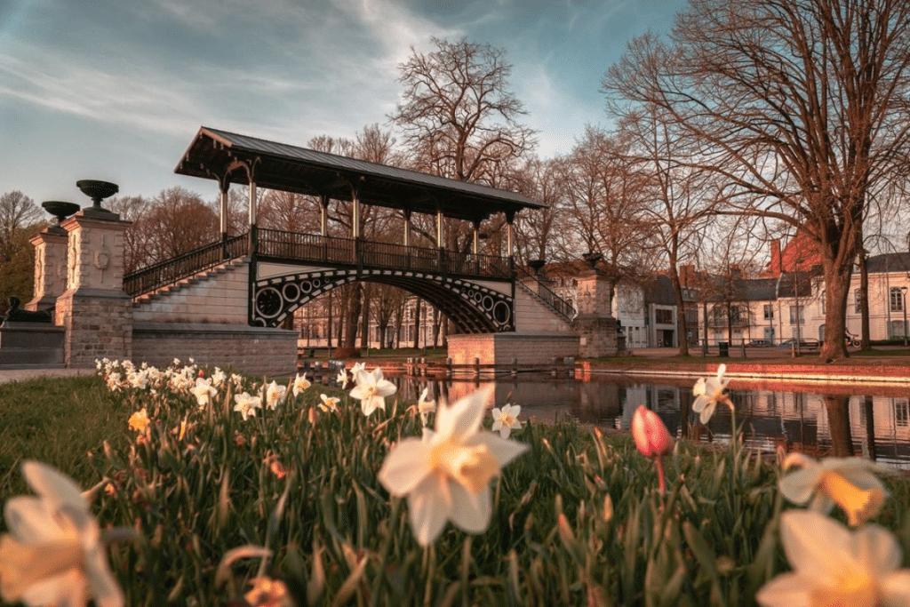 Vos plus belles photos de l'arrivée du printemps à Lille !