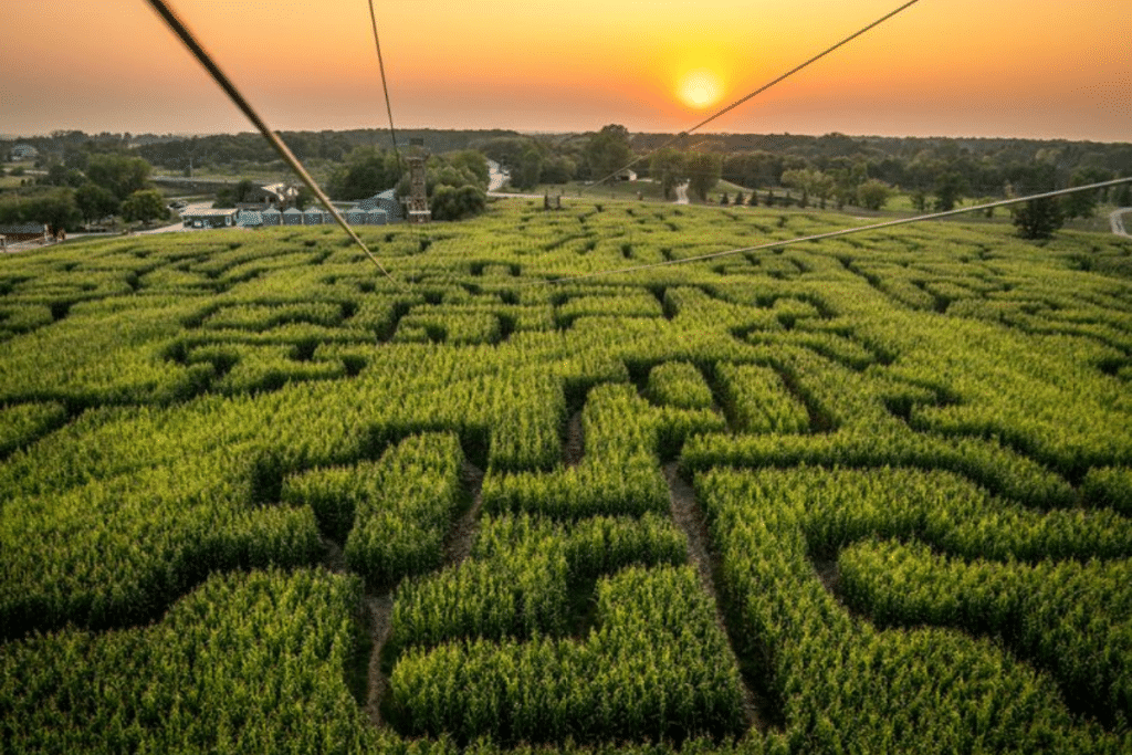 Insolite : un labyrinthe géant dans un champ de maïs près de Lille !