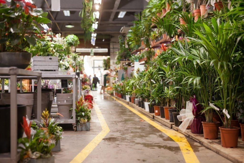 Une vente XXL de plantes à prix minis au Grand Playground ce week-end !