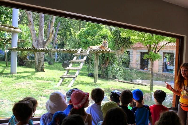 O Natal está a chegar ao zoo de Lisboa