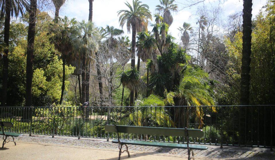 15 curiosidades sobre o Jardim Botânico de Lisboa