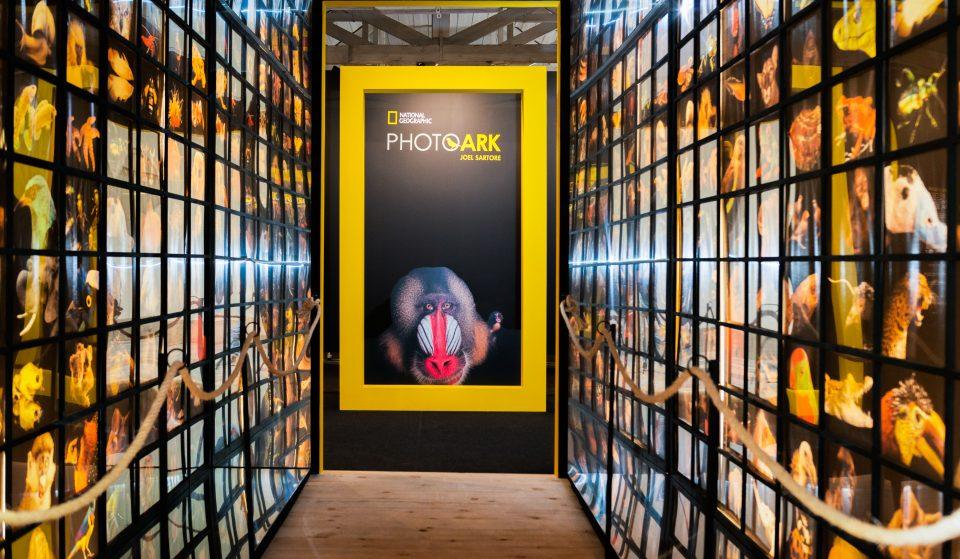 Photo Ark: A Arca de Noé do século XXI viaja num mar de fotografias