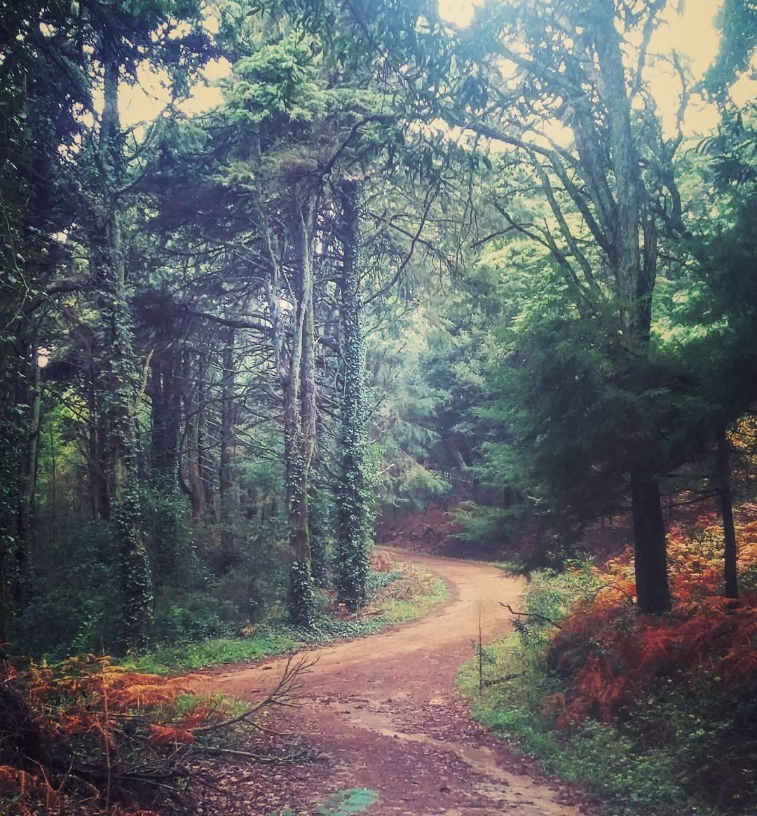 Os bosques de Sintra vão receber uma caminhada mágica