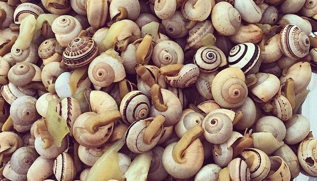 Os melhores sítios de Lisboa para comer caracóis