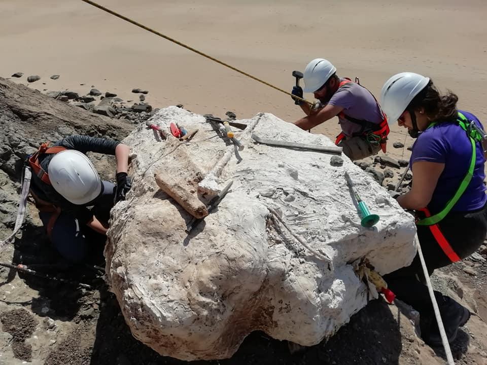 Paleontólogos encontraram ninho com ovos de dinossauros na Lourinhã