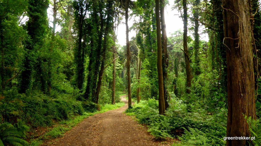 Bosque do Silêncio e Bosque do Penedo: vêm aí duas caminhadas incríveis pela Serra de Sintra