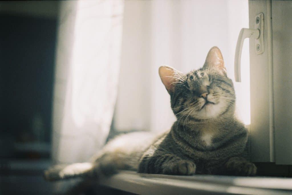 Carta de amor aos gatos lisboetas à janela