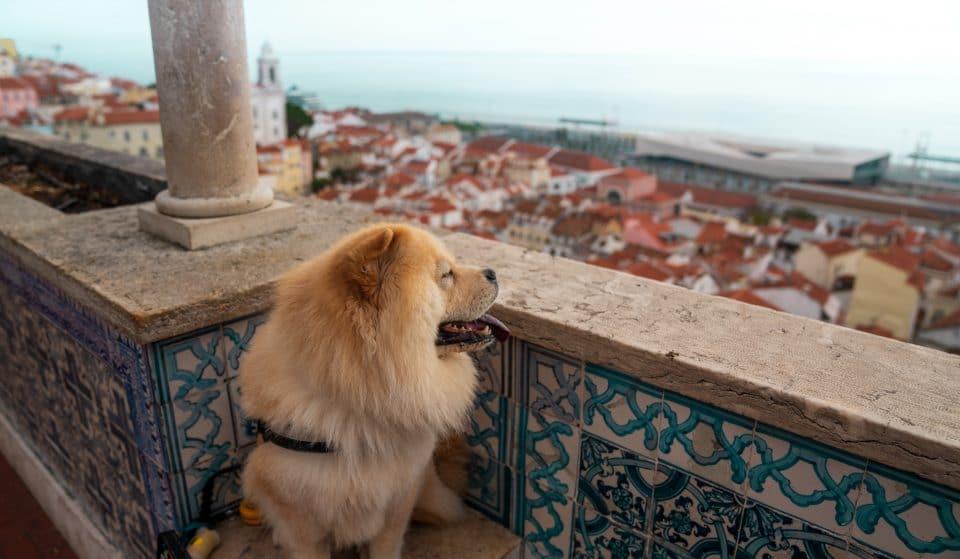 Dia Mundial do Cão: celebrar os cães em Lisboa