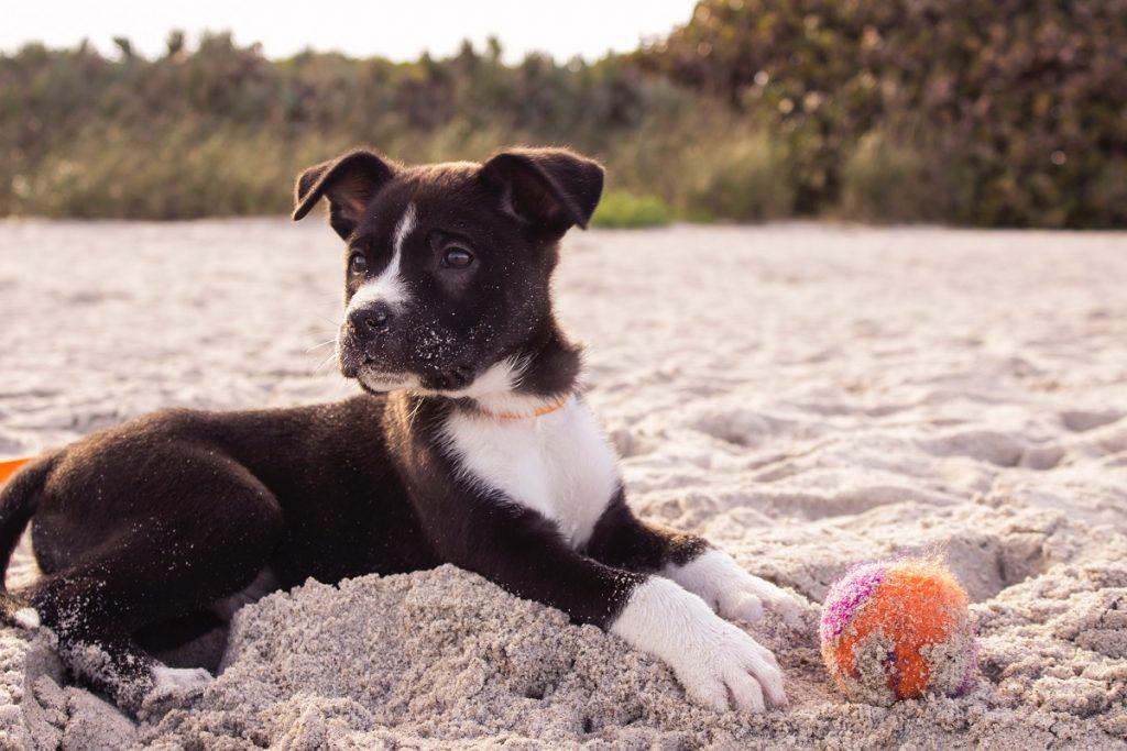 Vem aí a 2ª edição da Dog Summit