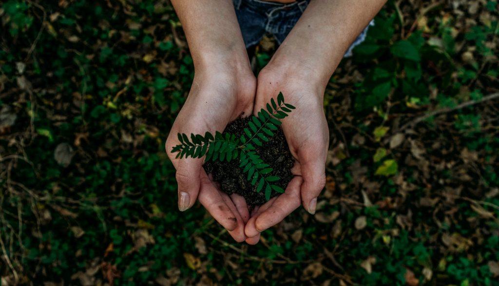 """Movimento """"Plante a sua árvore em Lisboa"""" regressa a Monsanto"""